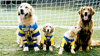 Zappbios - Air Bud Iii: World Pup