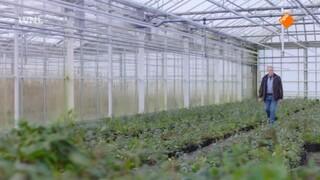 Stand van Nederland: Cashen met Groen
