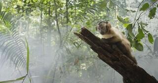 Zappbios Amazonia
