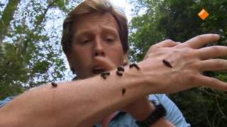Freeks Wilde Wereld - Bloeddorstige Beestjes