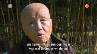 De Boeddhistische Blik: Buddha to be, een portret van Sister Chân Không