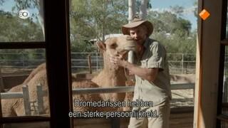 Kangaroo Dundee - Kangaroo Dundee En Andere Dieren