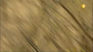 Steengroeve Slang