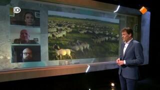 NieuwLicht Oostvaardersplassen: Hoort lijden van dieren bij de natuur, of moeten we beter voor ze zorgen?