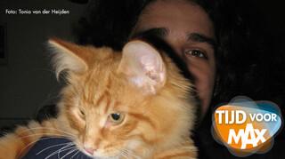 De katten van Tonio