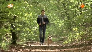 Let op! Extra toezicht op loslopende honden