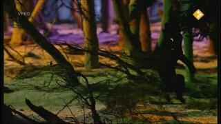 Verhalen van de boze heks De egel is ziek