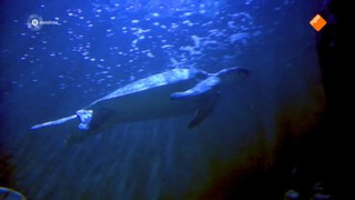zwemteam, aflevering 1