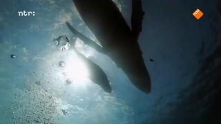 Wat hoor je onderwater?