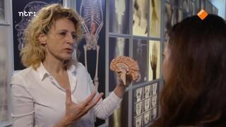 Hoe ontstaat migraine?