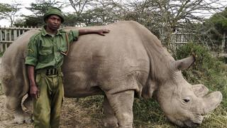 Natuur op 2 Sudan: de laatse neushoorn