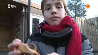 Wessel vs Julen