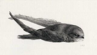 Het Uur Van De Wolf - Vogelparadijs - Peter Vos, Tekenaar