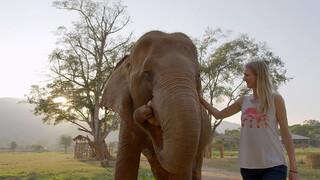 Helden van de Wildernis: Thailand