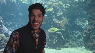 Het Klokhuis Zeeaquarium