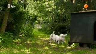 Puppy patrol Skip