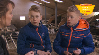 Zapp Anti Pest Club Nijkerk: stress door pesten