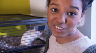 Het Klokhuis Ratten