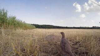 Vroege Vogels Bergherbos