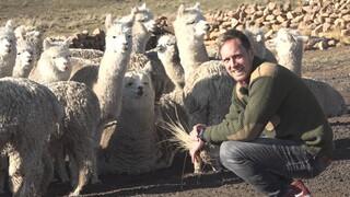 Het Klokhuis Alpaca's