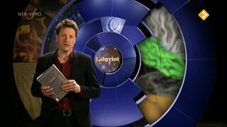 Labyrint TV Het ontstoken brein