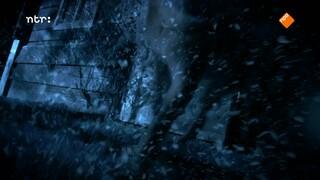 Dierendetectives - Wolfshond Shana