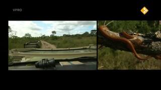 Freek in het wild Sloopolifanten