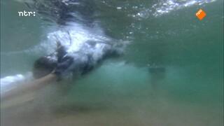 Dierendetectives - Een Groep Dolfijnen