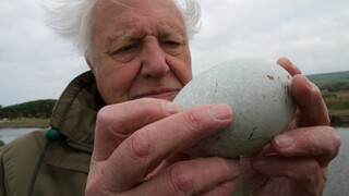 Attenboroughs wonderbaarlijke eieren Attenboroughs wonderbaarlijke eieren