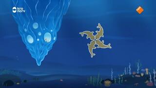 Inui - Onder Water