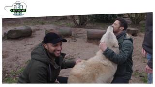 De Buitendienst Van Nieuws Uit De Natuur - Welkom Terug Wolf!