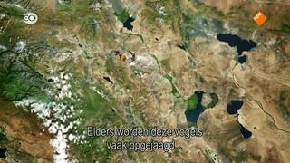 Leven in de Rimboe Het arendvolk van Mongolië