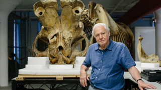 Attenborough And The Giant Elephant - Attenborough And The Giant Elephant