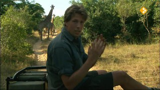 Freek in het wild Giraffen