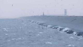 Vroege Vogels Tv - De Afsluitdijk