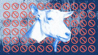 Zembla Ziek van geiten