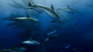 Blue Planet - De Diepzee