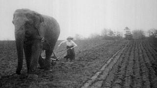 14-18, Dagboeken uit de Eerste Wereldoorlog Het thuisfront