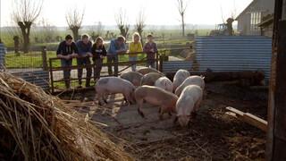 Onze boerderij Onze boerderij