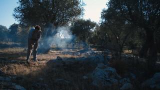 2Doc Kort Het einde van de olijfboom?