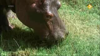 Freek op safari Nijlpaarden/Worstboomvrucht