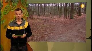 De Buitendienst van nieuws uit de natuur Sledehonden
