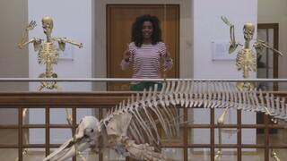 Het Klokhuis - Skelet