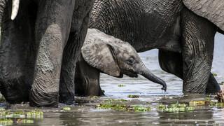 's Werelds Grootste Rivieren - De Nijl