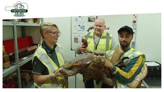 De Buitendienst Van Nieuws Uit De Natuur - Een Krokodil In Je Koffer?