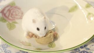 Koken met konijnen De geredde Franse hamsters