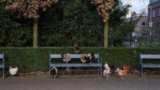 Typisch Typisch Zuilen - Utrecht