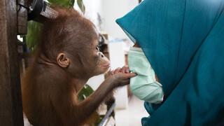Natuur op 2 Natuur op 2: Red de Orang-Oetan
