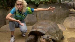 Het Klokhuis Schildpad