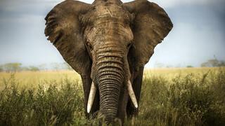 Natuur op 2 Natuur op 2: Animal Weapons